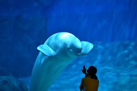 1024px-Port_of_Nagoya_Public_Aquarium4