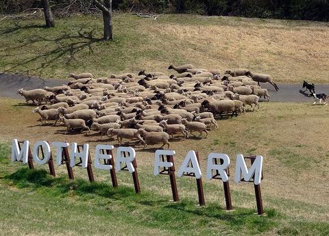1024px-羊の大行進