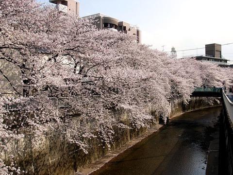 1024px-Shakujii_River_and_Sakura_20100403