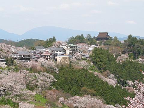 1024px-Cherry_blossoms_at_Yoshinoyama_01
