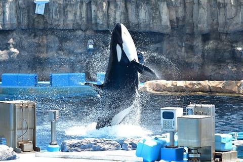 1024px-Port_of_Nagoya_Public_Aquarium3