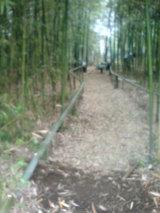 竹やぶに変化