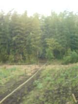 裏の竹やぶ