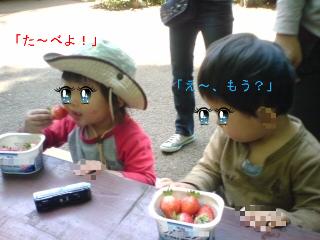 いちご5月13日1.JPG