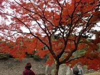 2乾通りの紅葉 (11)