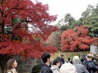 2乾通りの紅葉 (3)