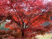 2乾通りの紅葉 (5)
