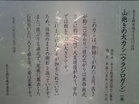 13里山 (11)