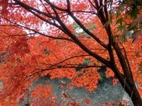 2乾通りの紅葉 (6)