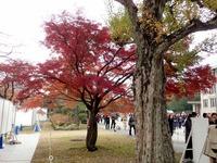 2乾通りの紅葉 (2)