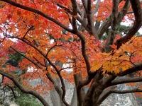 2乾通りの紅葉 (7)