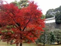 2乾通りの紅葉 (4)