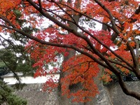 2乾通りの紅葉 (8)