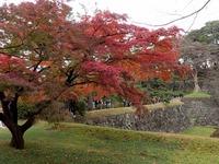 2乾通りの紅葉 (10)