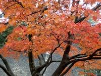 2乾通りの紅葉 (9)