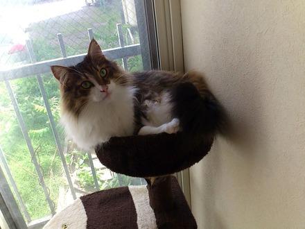今日は猫な日「ノルウェージャンのジャック日記」2014年6月11日(水)