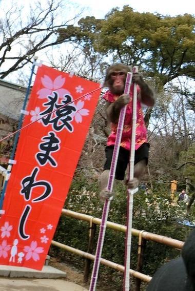 sarumawashi_4