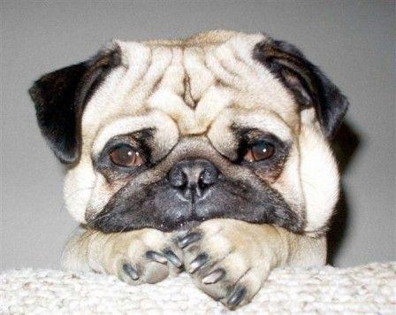 160218a_困った顔の犬