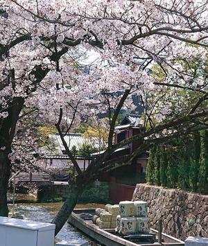 210327桜1