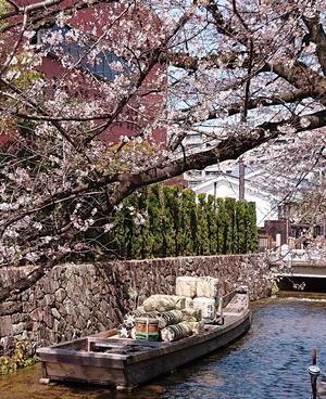 210327桜2
