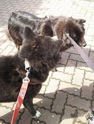 170412狂犬病予防1