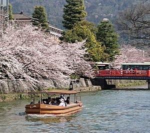 210327桜6