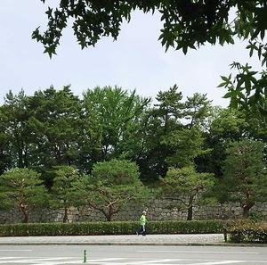 170615二条城生け垣3
