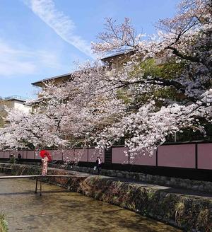 210327桜8