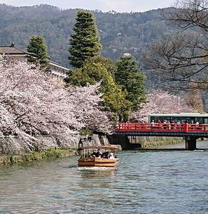 210327桜5