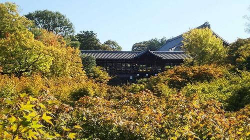 161103東福寺1