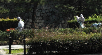 170615二条城生け垣1