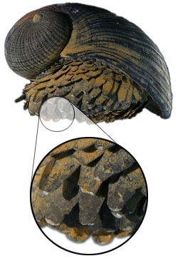scaly-snail-white