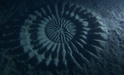 mystery-underwater-crop-circle-japan-4