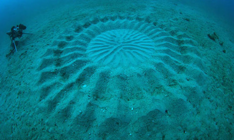 mystery-underwater-crop-circle-japan-5