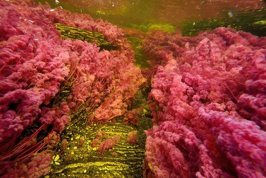 cano-cristales-liquid-rainbow-olivier-grunewald-5__880