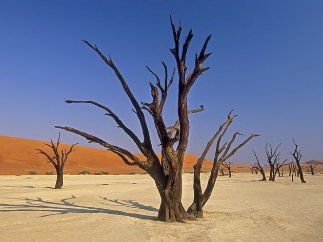 Deadvlei-Namibia-5