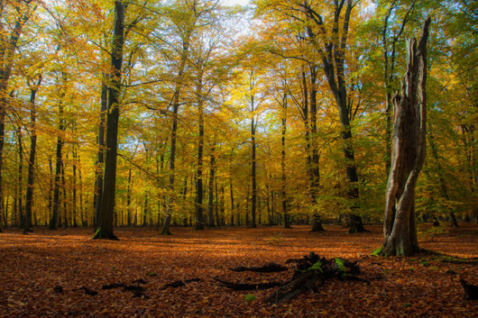 autumn_is_such_a_beautiful_season_640_26