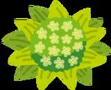 plant_fukinotou[1]