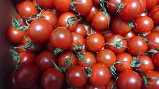 「奏:かなで」というトマト