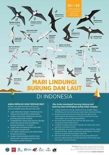 インドネシア海鳥ポスター