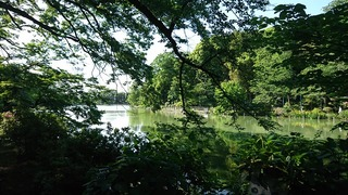 20200511善福寺公園上の池
