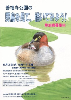 3谷口高司野鳥観察会ポスター_page0001