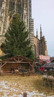 ウルム・クリスマス市