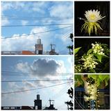 21.10.01 今日の空と庭のお花3種