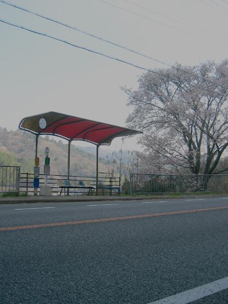 丹波の桜 「国道古市 バス停」 篠山市古市