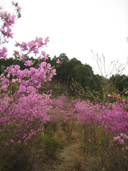 丹波の森公苑