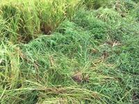 除草された雑草達
