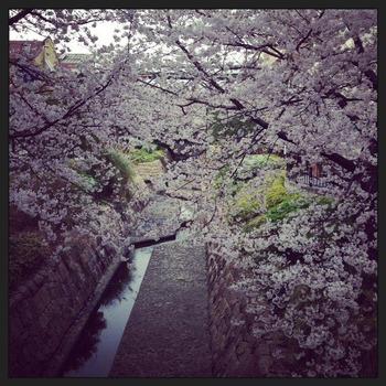 2014-3-31-sakura