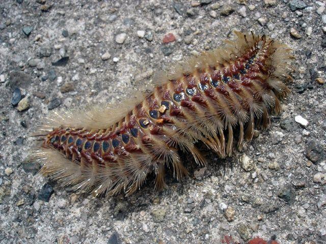 人間がゴキブリを怖がる1番の理由