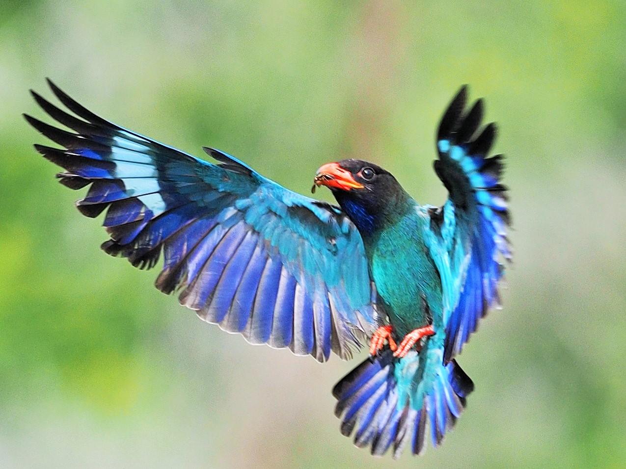 試し鳥のブログ2 : 森の宝石と云...